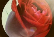 S.Valentino e la Rosa: il pretesto